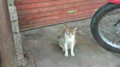 Wheel, Spoke, Tire, Alloy Wheel, Car Wheel, Pet, Animal, Cat, Mammal, Abyssinian, Kitten