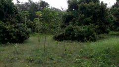 Vegetation, Plant, Bush, Tree, Nature, Outdoors, Land, Jungle, Woodland, Forest, Rainforest, Abies, Fir, Conifer, Field