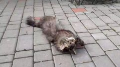 Walkway, Path, Flagstone, Pavement, Sidewalk, Slate, Brick, Pet, Animal, Mammal, Cat, Kitten, Cobblestone, Floor, Concrete