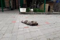 Cat, Pet, Yard, Walkway, Path, Flagstone, Vase, Pottery, Plant, Potted Plant, Jar, Kitten, Brick, Building, Slate