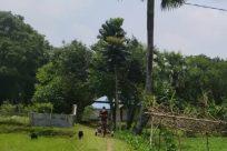 Building, Plant, Vegetation, Tree, Countryside, Rural, Shelter, Housing, Land, Palm Tree, Arecaceae, Hotel, Grass, Yard, Hut