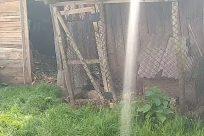 Yard, Backyard, Plant, Grass, Zoo, Gate, Machine, Countryside, Rural, Fence, Vegetation, Urban, Building, Jar, Potted Plant