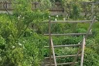 Plant, Vegetation, Gate, Garden, Yard, Arbour, Shelf, Jar, Potted Plant, Pottery, Vase, Tree, Bamboo, Forest, Land