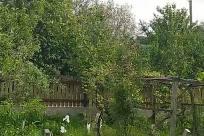 Garden, Yard, Arbour, Plant, Porch, Patio, Tree, Vegetation, Backyard, Housing, Building, Cottage, House, Pergola, Gate