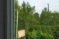 Room, Yard, Plant, Vase, Jar, Potted Plant, Pottery, Bathroom, Vegetation, Shower, Planter, Garden, Field, Backyard, Tree