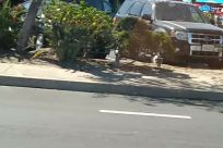 Road, Automobile, Vehicle, Car, Path, Urban, Plant, Building, Town, Street, City, Vegetation, Bumper, Asphalt, Tarmac