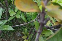 Leaf, Plant, Vegetation, Bush, Blossom, Flower, Geranium, Tree, Veins, Acanthaceae, Petal, Invertebrate, Insect, Jar, Potted Plant