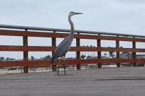 Bird, Waterfowl, Crane Bird, Heron, Stork, Egret, Pier