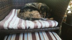 Pillow, Cushion, Furniture, Home Decor, Couch, Sleeping, Asleep, Cat, Pet, Blanket, Chair, Bed, Room, Kitten, Bedroom