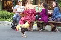 Chicken, Fowl, Poultry, Cock Bird, Rooster, Furniture, People, Urban, Bench, Building, Town
