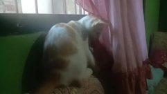 Pillow, Cushion, Home Decor, Furniture, Pet, Veil, Asleep, Sleeping, Cat, Canine, Face, Female, Dog, Curtain, Blanket