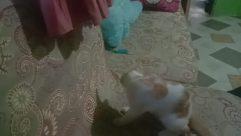 Cushion, Pillow, Cat, Pet, Furniture, Room, Canine, Floor, Blanket, Bedroom, Sleeping, Asleep, Dog, Home Decor, Face