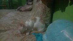 Pillow, Cushion, Furniture, Chair, Pet, Cat, Home Decor, Kitten, Canine, Bird, Bed, Dog, Sleeping, Asleep, Bedroom