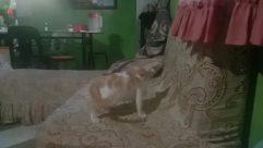 Furniture, Pet, Cat, Kitten, Clinic, Bed, Room, Canine, Dog, Bedroom, Cushion, Pillow, Bird, Blanket, Art