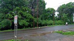 Vegetation, Plant, Automobile, Car, Vehicle, Forest, Land, Tree, Woodland, Road, Grove, Bush, Building, Urban, Town