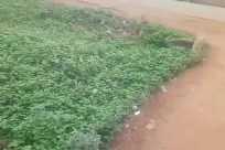 Plant, Vegetation, Grass, Land, Bush, Ground, Field, Building, Tree, Vehicle, Woodland, Forest, Yard, Grove, Soil