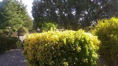 Plant, Vegetation, Bush, Tree, Fir, Abies, Garden, Arbour, Conifer, Pottery, Jar, Vase, Potted Plant, Road, Fence