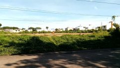Road, Vegetation, Plant, Bush, Building, Fence, Hedge, Neighborhood, City, Town, Cable, Suburb, Street, Wheel, Vehicle