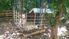 Zoo, Canine, Pet, Dog, Cat, Den, Dog House, Soil, Construction, Plant, Jar, Pottery, Vase, Wood, Potted Plant