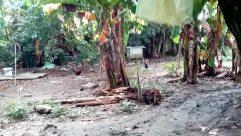 Vegetation, Plant, Yard, Tree, Land, Rainforest, Jungle, Woodland, Forest, Grove, Building, Backyard, Town, City, Road