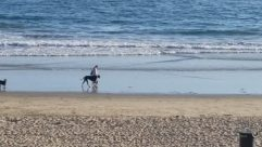 Water, Sea, Ocean, Shoreline, Canine, Dog, Pet, Furniture, Chair, Coast, Sand, Horse, Beach, Bike, Bicycle