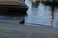 Bird, Water, Vehicle, Waterfront, Port, Harbor, Waterfowl, Duck, Beach