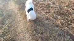 Canine, Dog, Pet, Puppy, White Dog, Eskimo Dog, Grass, Plant, Wildlife, Fox, Yard, Arctic Fox, Cat, Bird, Rock