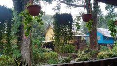Plant, Vase, Pottery, Potted Plant, Jar, Building, Yard, Hotel, Housing, Cottage, House, Planter, Resort, Garden, Rural