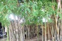 Bamboo, Vegetation, Plant, Tree, Land, Jungle, Rainforest, Rock, Forest, Woodland, Grove, Tin, Barrel, Grass, Can