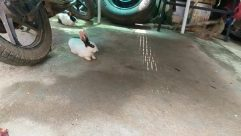 Wheel, Hare, Rodent, Tire, Motorcycle, Vehicle, Bird, Rabbit, Bunny, Car Wheel, Spoke, Dog, Canine, Pet, Soil