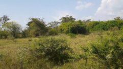Plant, Vegetation, Bush, Land, Field, Grassland, Tree, Wilderness, Rainforest, Woodland, Forest, Jungle, Savanna, Countryside, Grove
