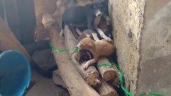 Rock, Canine, Dog, Pet, Puppy, Wildlife, Kit Fox, Fox, Soil, Furniture, Hound, Wolf, Red Wolf, Building, Housing