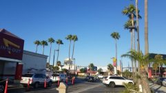 Automobile, Vehicle, Car, Road, Arecaceae, Tree, Plant, Palm Tree, Intersection, Wheel, Building, City, Town, Metropolis, Downtown
