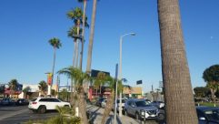 Plant, Tree, Automobile, Car, Vehicle, Arecaceae, Palm Tree, Wheel, Lamp Post, Parking, Parking Lot, Road, Tree Trunk, Path, Aircraft