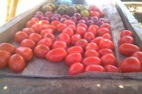 Plant, Food, Fruit, Grapes, Vegetable, Vegetation, Tree, Road, Tomato, Produce, Toy, Swing, Market, Shop, Land