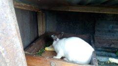 Cat, Pet, Rodent, Bunny, Rabbit, Hare, Brick, Wood, Angora, Fireplace, Plant, Hardwood, Home Decor