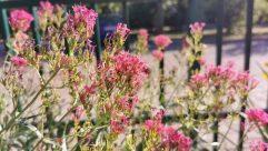 Flower, Blossom, Plant, Geranium, Bee, Invertebrate, Andrena, Hornet, Insect, Wasp, Pollen, Petal, Flower Arrangement, Bird, Bee Eater