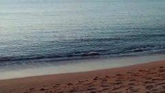 Water, Shoreline, Ocean, Sea, Sand, Beach, Coast, Skin, Bird, Heel, Sky, Soil, Shorts, Footprint, Paddle
