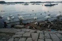 Bird, Water, Seagull, Waterfront, Wood, Boat, Vehicle, Port, Dock, Pier, Rock, Sea, Ocean, Waterfowl, Driftwood
