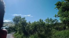 Plant, Vegetation, Bush, Tree, Land, Woodland, Forest, Grass, Grove, Path, Sky, Azure Sky, Jungle, Landscape, Building