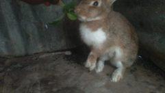 Hare, Rodent, Canine, Dog, Pet, Bunny, Rabbit, Bear, Wildlife, Cat