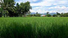 Field, Grassland, Plant, Vegetation, Grass, Countryside, Paddy Field, Tree, Land, Forest, Woodland, Rural, Rainforest, Farm, Grove
