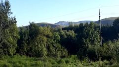 Vegetation, Plant, Tree, Bush, Abies, Fir, Land, Forest, Woodland, Countryside, Grove, Conifer, Jungle, Field, Pine