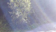 Weather, Flare, Light, Sunlight, Fog, Plant, Mist, Vegetation, Tree, Land, Woodland, Forest, Road, Ice, Path