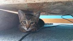 Cat, Pet, Abyssinian, Kitten, Manx, Cushion, Pillow