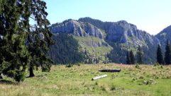 Tree, Plant, Abies, Fir, Mountain, Wilderness, Mountain Range, Slope, Peak, Vegetation, Landscape, Conifer, Panoramic, Path, Land