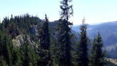Plant, Tree, Abies, Fir, Conifer, Pine, Spruce, Slope, Vegetation, Landscape, Mountain, Forest, Land, Wilderness, Woodland