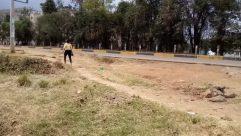 Ground, Plant, Vegetation, Yard, Land, Tree, Forest, Woodland, Vehicle, Car, Automobile, Soil, Grove, Grass, Path