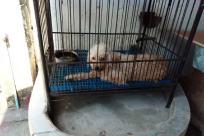 Den, Dog House, Kennel, Ferret, Wildlife, Tiger, Pet, Canine, Dog, Furniture, Crib, German Shepherd