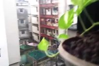 High Rise, City, Building, Town, Slum, Apartment Building, Plant, Shelter, Rural, Countryside, Housing, Condo, Window, Street, Road